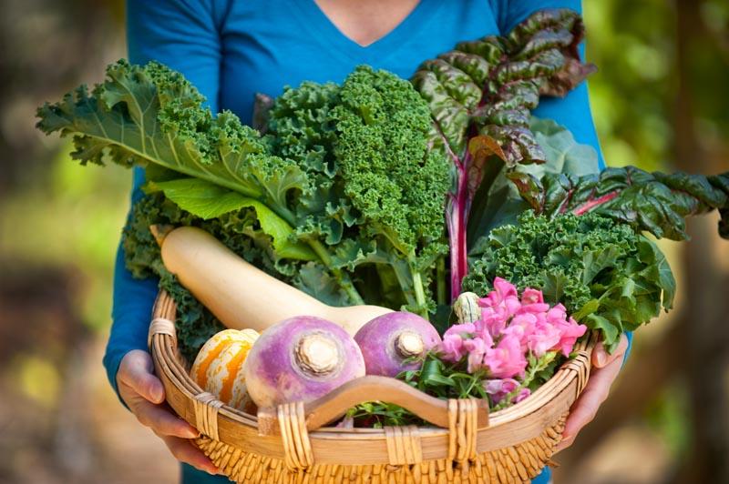 Грижи за зеленчуковата градина